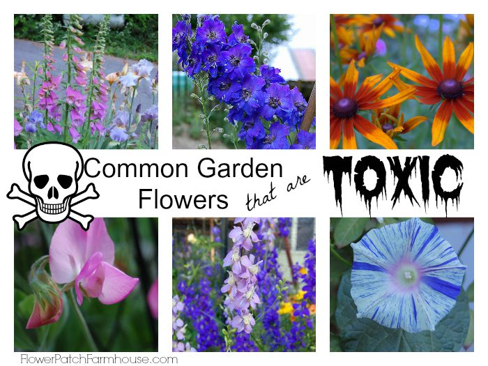 Is Your Flower Garden Dangerous? , Flower Patch Farmhouse